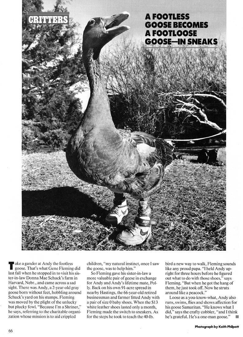 Andy, the Footless Goose (People Magazine, 1989)