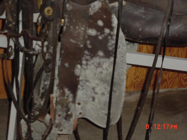 Mold growth on leather saddle