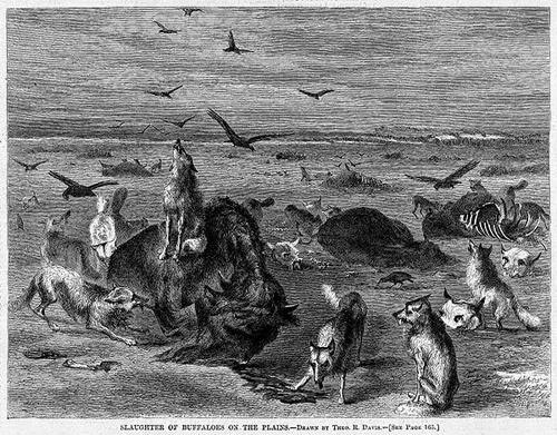This illustration of slaughtered buffalo on the Plains appeared in Harper's Weekly, February 24, 1872.