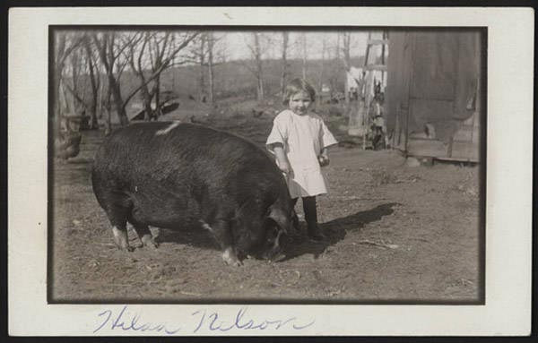 John Nelson's photograph, dating from 1913 to 1915, depicted young Hilda Nelson with a pig named Polly. During World War I city dwellers were asked to raise pigs to increase the nation's food supply. NSHS RG 3542.PH:020-01