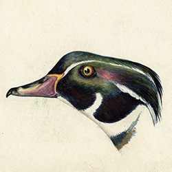 painting of duck's head